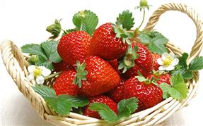 沙坪坝区草莓采摘基地