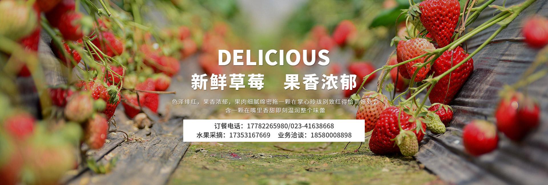 重庆草莓采摘园